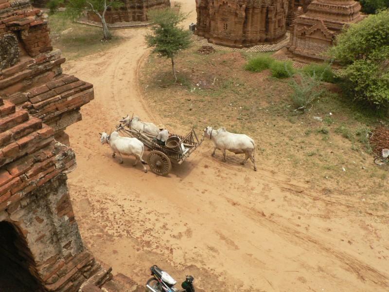 Birma 350