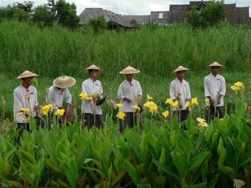 Birma 464